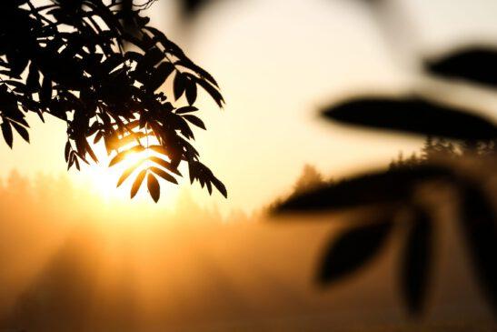 Kuvituskuva, jossa on auringonnousu ja puiden lehtiä.
