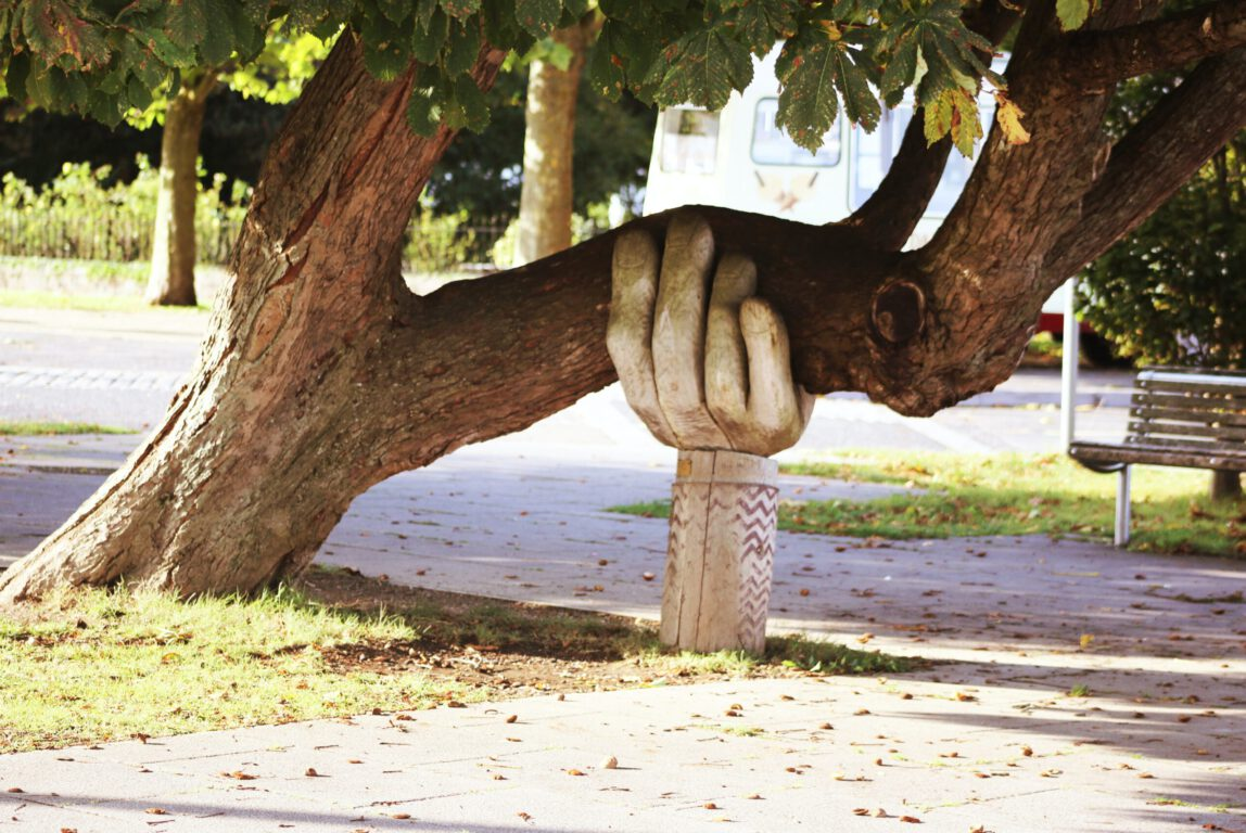 Kuvassa on puun oksa, jota kannattelee alhaalta päin iso käsi.